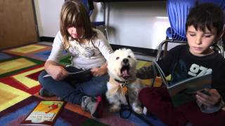 Meet Levi, A Tiny Terrier Helping Chestermere Kids Learn To Read