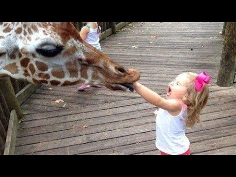 Funny Kids At The Zoo Try Not To Laugh