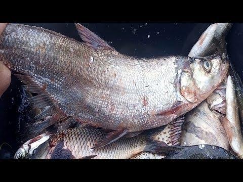 НЕОБЫЧНЫЕ РЫБЫ АМУРА, КИТАЙСКИЙ ОКУНЬ- АУХА, ВЕРХОГЛЯД,АМУРСКАЯ ЩУКА,  Рыбалка с Fishermandv27rus