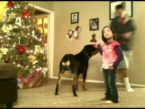 Rottweiler Unexpectedly Attacks Owner While Training Youtube
