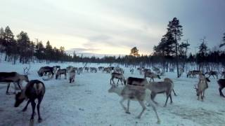 The Travel Show - Finland (Week 11)