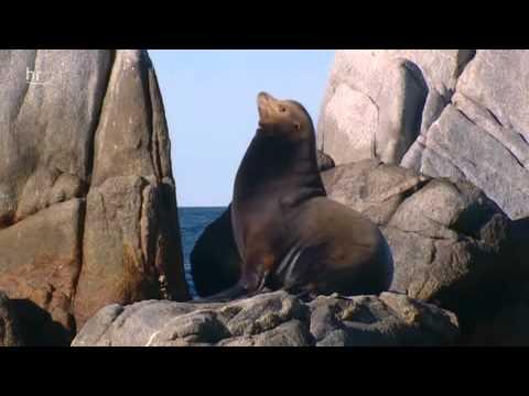 Baja California - das andere Kalifornien (hr3)