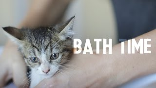 Daisy, the tiny kitten, gets her first bath