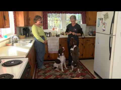 Doggy Dilemmas - Jumping & Counter Surfing Brittany Spaniels