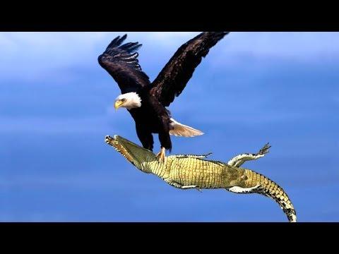 7-mejores-ataques-de-Águilas-registrados