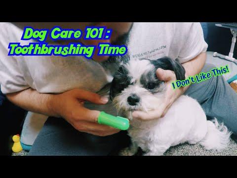 KimchiRednecks do Dog Care - ToothBrushing