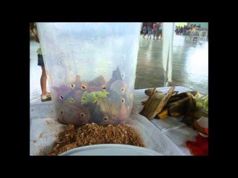 Como hacer abono organico en casa youtube - Hacer abono organico ...