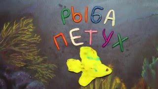 Рыба петух.  Пластилиновый познавательный мультфильм. Betta splendens. Plasticine Animation