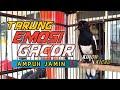 Suara Pancingan Kacer Langsung Tarung Emosi Gacor Gak Bakalan Diem Ampuh Jamin  Mp3 - Mp4 Download