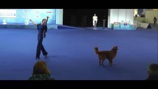 Фото ЕВРАЗИЯ 2017   Танцы с собаками    Рублева Наталья и  ЛОРЕВИ НЬЮ ВИННЕР