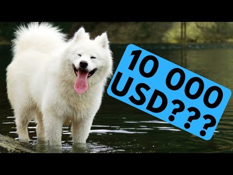 TOP 10 Most Expensive Dog Breeds List