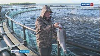 Рыбная продукция карельского форелевода удостоена высоких наград