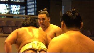 Yokozuna Harumafuji was training with some Sumo wrestlers at Ozumo ...