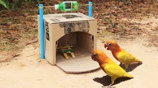 Creative Easy Bird Trap Technology - Build Bird Trap Make from Cardboard With Water Bottle