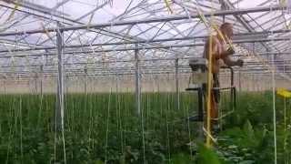 Работа в теплице (greenhouse)