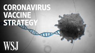 How Scientists Are Trying to Develop a Coronavirus Vaccine   WSJ