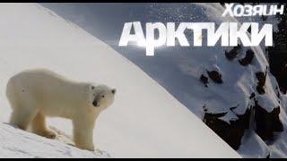 Хозяин Арктики - белый медведь