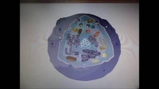 Строение клетки  Гофман