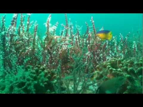 The Science Behind Florida's Marine Fisheries (entire program)