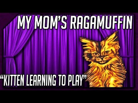 My Mom's Ragamuffin || Kitten Learning to Play