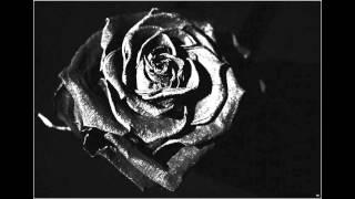 Schwarze Rose - Stefan Schramm