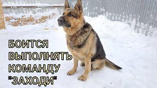 Команда, которую боится выполнять моя собака - немецкая овчарка, Джейкоб