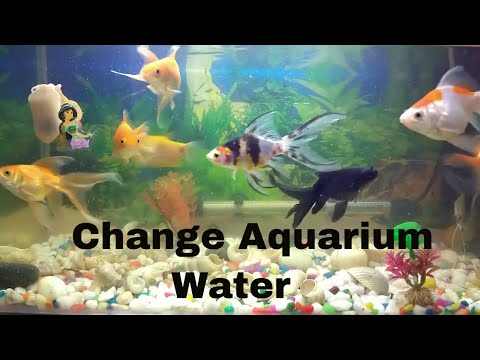 How to Change the Water in a Fish Aquarium Fish Tank एक्वेरियम फिश टैंक का पानी कैसे बदले
