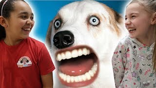 VERY FUNNY ANIMALS!! Try Not To Laugh Challenge