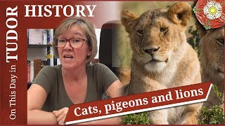 November 10 - Cats, pigeons and lions