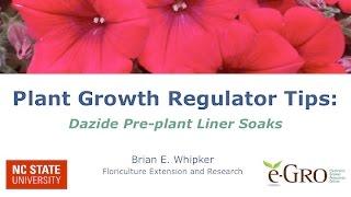 Dazide Pre-Plant Liner Soak Experimental Trial
