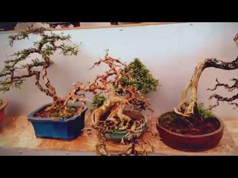 Bonsai quần hùng tại chợ cây Hà Đông