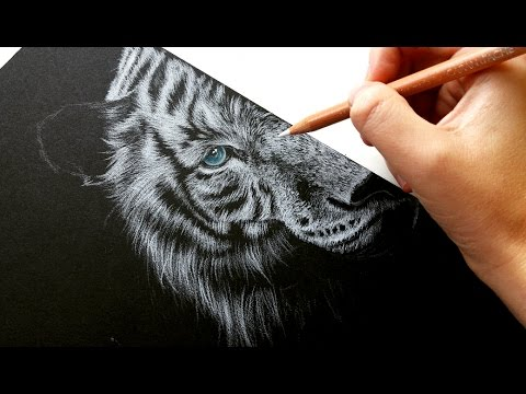 How to draw white fur on black paper colored pencil leontine van vliet