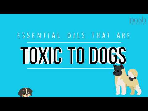 common-essential-oils-that-are-toxic-to-dogs