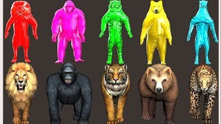 wild animals finger family song for kids | nursery rhymes,children,toddlers,colors,NASH TOON Tv