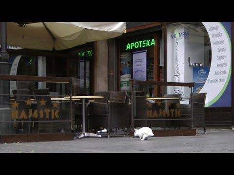 Kaninchen / Rabbit  in  Belgrad / Beograd / Београд (SRB)