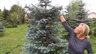 REGREENER kopā ar Dārzs zem Saules Antru gatavojas Ziemassvētkiem!