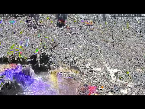 Live Deer & Wildlife Webcam 3