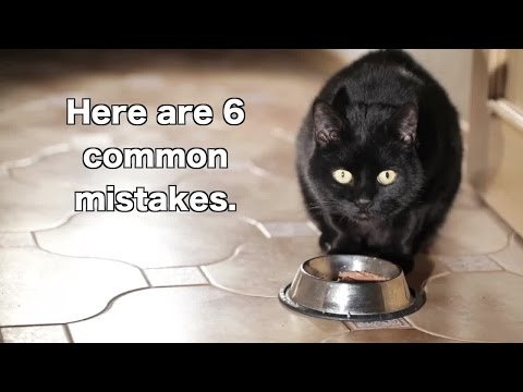 6 Ways You're Feeding Your Cat Wrong