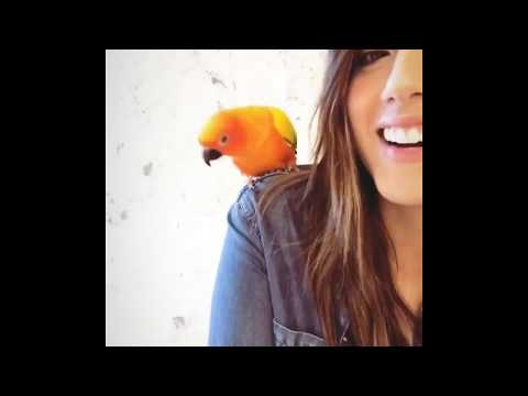 Chloe Bennet Posted A Video With Maverick (Logan Paul's Bird)