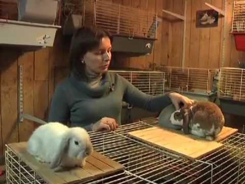 Вопрос: Питомник Царский Кролик. Отзывы?
