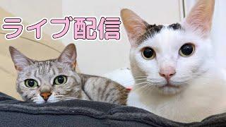 GWなので猫たちとライブ配信!
