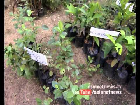 Alappuzha Little Flower Nursery : Money Time 5th May