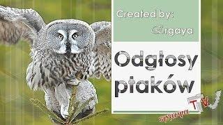 Odgłosy ptaków/ the sounds of birds/ i suoni degli uccelli