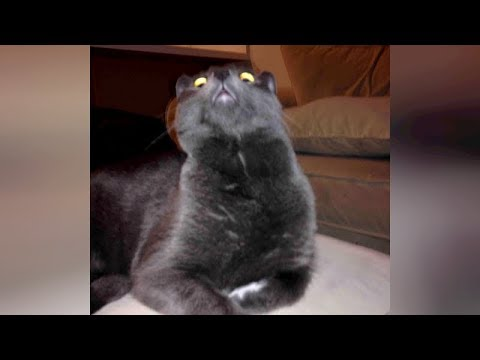 ANIMAL VIDEOS soooo FUNNY that you will be STUNNED! - TRY NOT TO LAUGH!