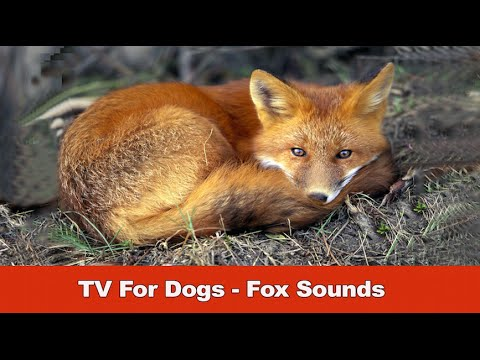 TV For Dogs - Fox Sounds