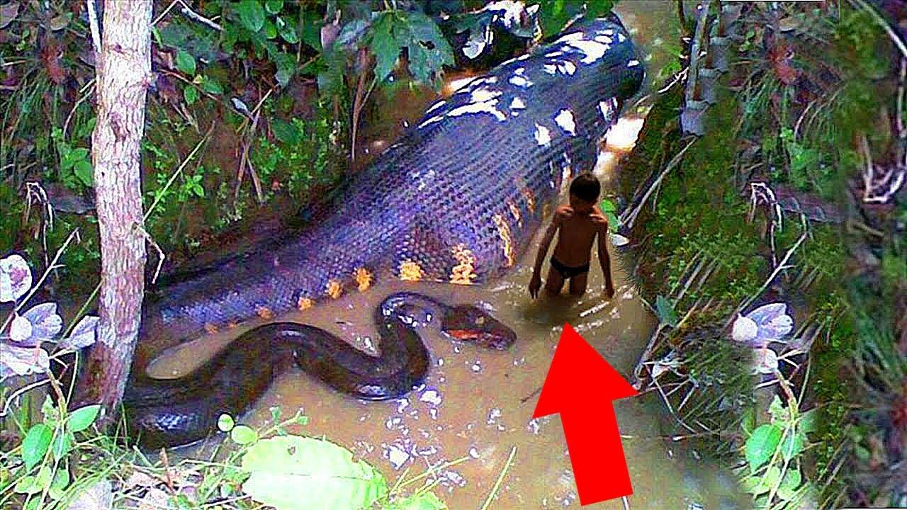 أخطر 10 كائنات مميتة فى نهر الأمازون Youtube