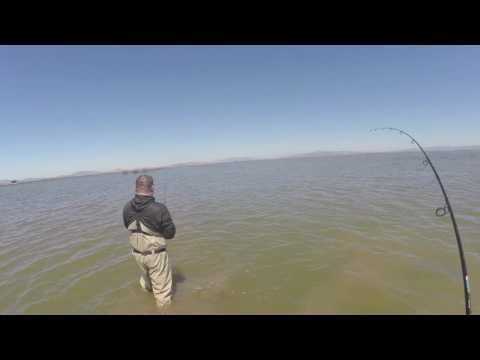Napa River Fishing 072216