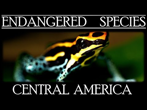 Endangered Species in Central America