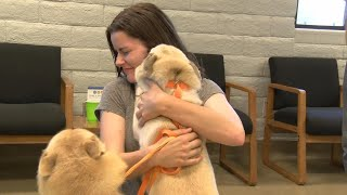 14 Dogs Reunite With Owners After Van Transporting Them Is Stolen in California