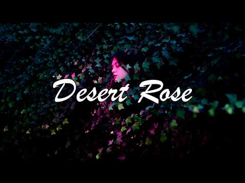 [Lyrics] Lolo Zouaï - Desert Rose (Official Audio)